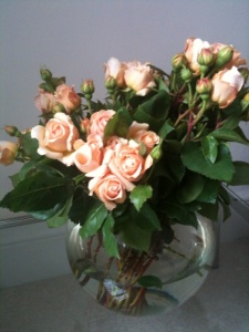 The beautiful roses I bought for £20